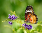 This image has an empty alt attribute; its file name is adobestock_67822935_preview.jpeg